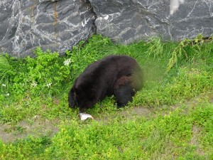 Lunchtime for the bear