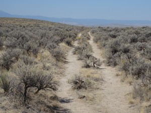 Oregon Pioneer Trail Wagon Wheel Ruts